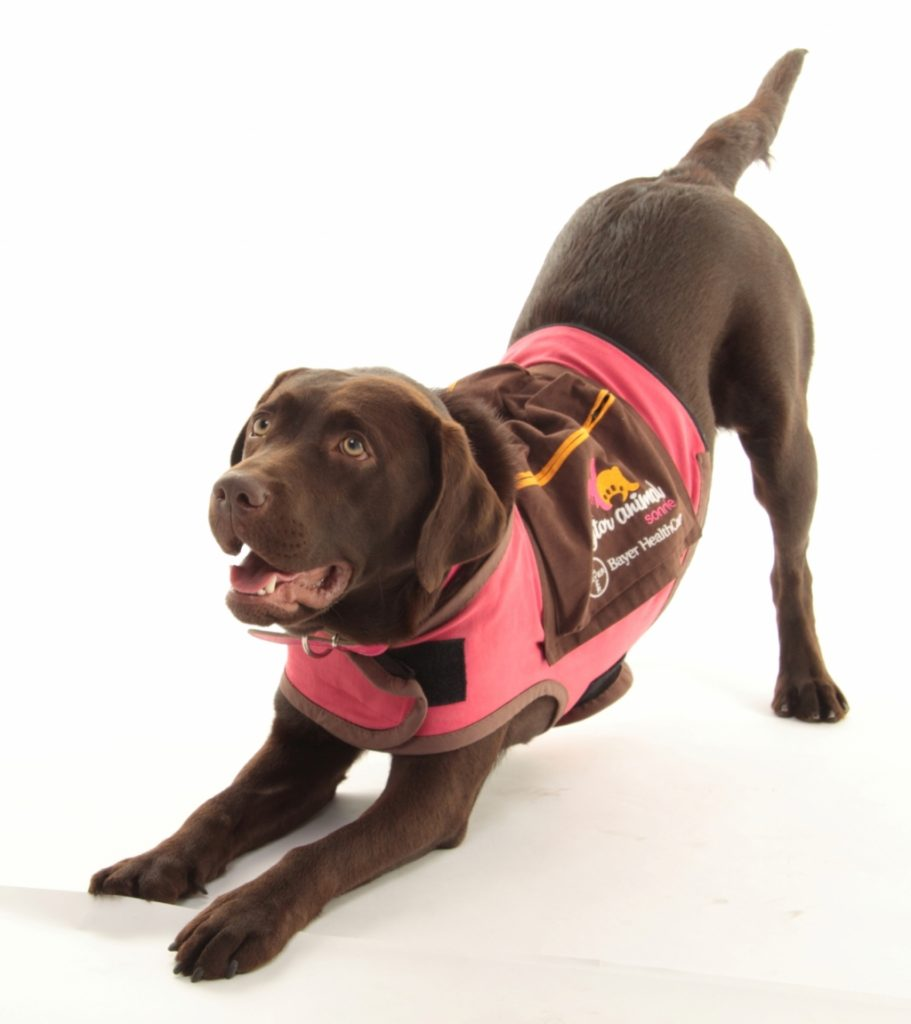 Dogcotor Animal